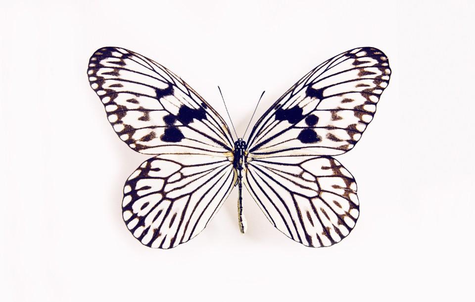 Butterfly by Herring & Herring